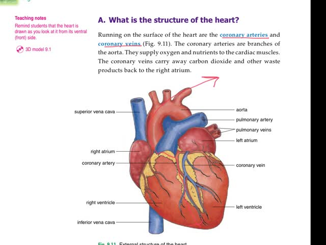 Biological Concept-Ch.8 (14) - How heart adapted to its ...